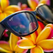 Maui Jim now in stock